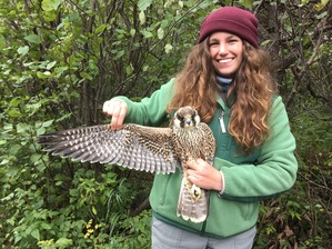 Banding Trainee Hannah with HY Peregrine Falcon Oct 2019 by F Nicoletti