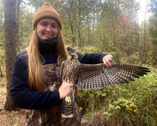 Banding Trainee Jessy with Peregrine Falcon Sept 2020 by F Nicoletti