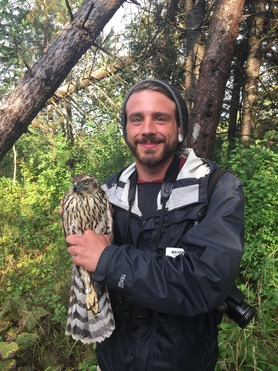 Count Trainee - Nick P with Northern Goshawk
