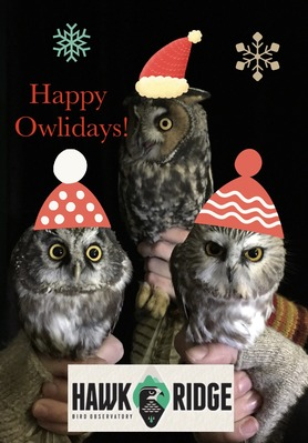 Happy Owlidays 2019! Original photo by Hannah Toutonghi