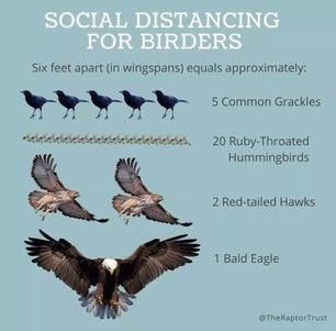 Social Distancing for Birders 2